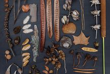 Herbarium collage