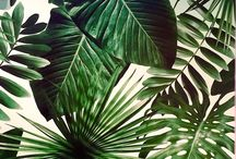 tropical inspo