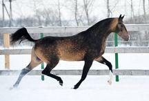 horse fur colour
