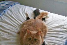 Naughty Meowzers