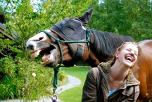 Humorous & hilarious animals / Animals in cheerful and odd positions or funny situations