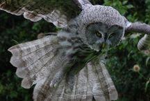 Owls / by Gloria Holland