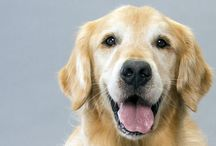 Dog Breeds / A spotlight on traits and characteristics common to certain canines