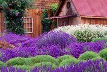 Lavender Everything
