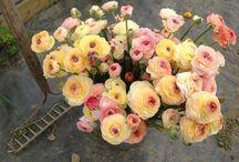 fleurs en juin