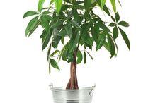 Plantes et arbustes / A découvrir ici ▶ http://bit.ly/2hKwkY9