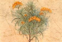 Flori si plante de apartament