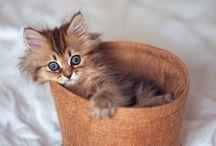 Cats & kittens / Cute cats