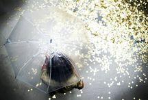 Ombrelli / ombrelli ottimi soggetti per belle foto e oggetti d'arte