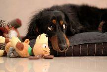 Doggies / by Mackenzie Shelley