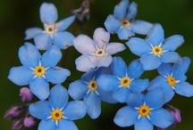 Voorjaarsbloemen/Spring flowers / Foto's van de bloemen en planten die hier in de buurt van Lure vanaf het begin van het groeiseizoen te vinden zijn