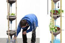 Grow Food - Aquaponics