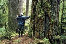 Inspiring FORESTS / We don't cut trees, we rescue fallen structures. From Earth's last old-growth trees, to natl forests, to little woods you're planting...let's honor forests.