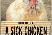 Tavuk hastalık