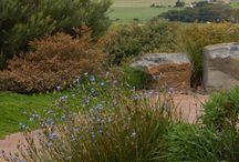 My Little Garden / by Sharon Howard
