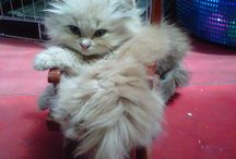 lovely kitty / i love them, like my son