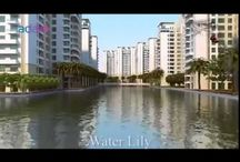 Water lily Adani shantigram township Ahmedabad