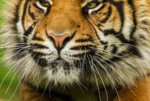 Animals / Wildlife photos and art