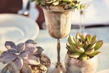 Succulent love / by Hire Love
