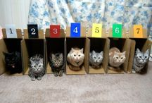 Organizing Cats