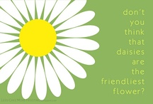 daisies / by Melissa Shipman