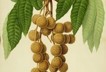 Ilustraciones botánicas de subtropicales