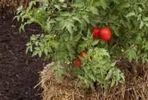 Garden Veggies Ideas