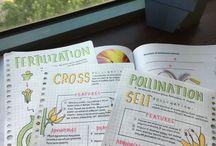 Study for study