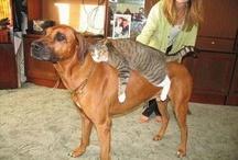 çılgın kediler