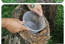tree stump planters