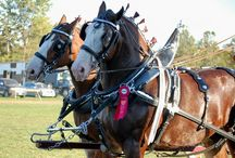 HORSE COMPETITIONS