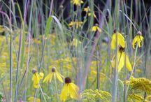Wild en Wollig / natuurlijk ogende beplanting op z'n best prairietuinen - inspiratie
