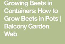 Vegetables/seedlings