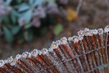 De iarna / Rece, cald, inghetat, moale, pufos, dragut, liniste, introspectie, zambet :)