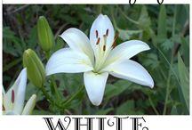 wit tiun