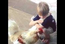 Farmed Animal Friends