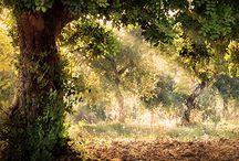 The tree world