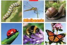 Minibeasts - Teaching Resources / Explore all things creepy and crawly with these minibeast-themed resources from Scholastic UK, including interactive activities, poems, posters and printable activity sheets.  Subscribe now at https://education.scholastic.co.uk/subscriptions.
