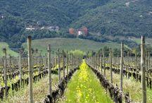 Vineyards / ATALAYAS VINEYARD, CASABLANCA VALLEY LAS KURAS VINEYARD, CACHAPOAL VALLEY APALTA VINEYARD, COLCHAGUA VALLEY