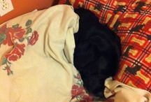 Black labs <3 / by Jane Gilmour