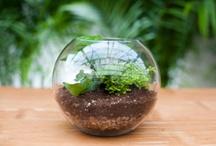 Garden / by Kimberly Becker Lencki