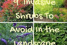 Gardening Sins