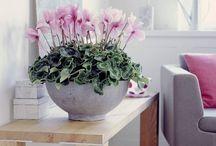 Цветы и тд