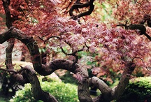 Ahh, the tree / by Maxine McLeod