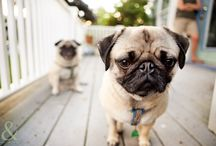 Pugs not drugs. / by Katie Gutwein