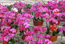 Orchideák / orchidea, plant, orchideák, kert, növények