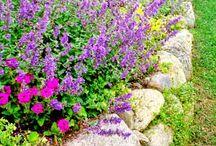 GARDEN / garden ideas and growing tips