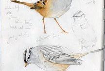 Vögel | Lars Schönberg / Der Schutz unserer heimischen Vogelwelt liegt mir ganz besonders am Herzen. Zeichnungen, Bilder und Tipps rund um Birdwatching und Vogelschutz.