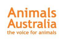 Animals need love too