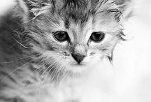 Cute / Animals